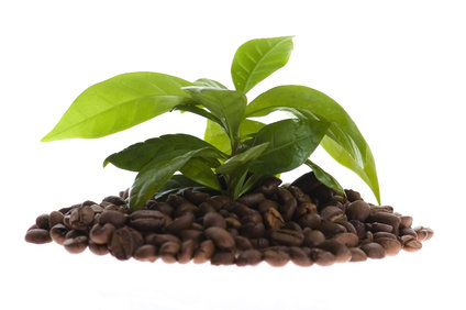 Tajemství zelené kávy